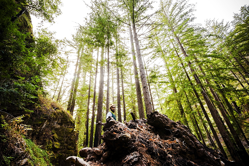 A man stands in a forest among tall trees, Julia Pfeiffer Burns State Park, California, United States of America