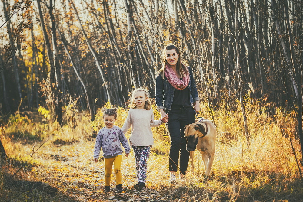 A beautiful mom and her two little daughers walking their Great Dane through the woods in a city park on a warm fall evening, Edmonton, Alberta, Canada - 1116-48192