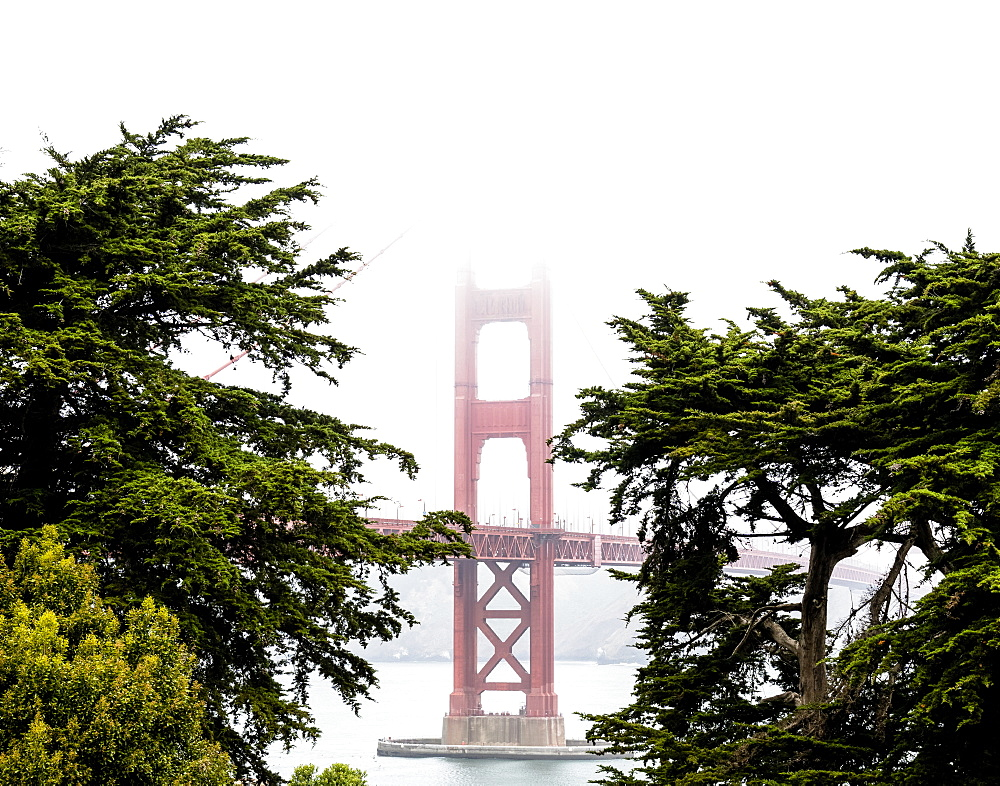 A stem from the Golden Gate Bridge shows itself through the trees and fog, San Francisco, California, United States of America