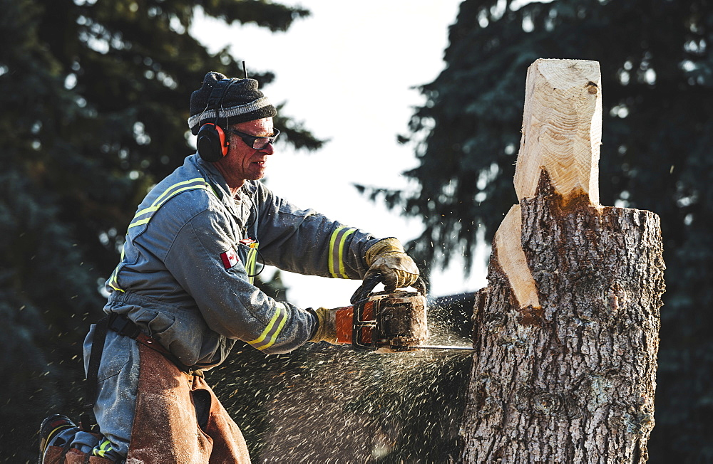 Artist using chainsaw to cut wooden sculpture from a tree, Edmonton, Alberta, Canada - 1116-48256