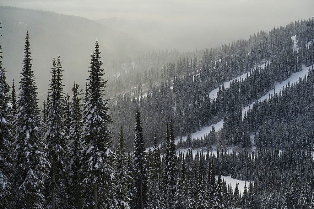 Sunlight illuminating fog over the frosty, snow-covered coniferous trees on the mountains at a ski resort, Sun Peaks, British Columbia, Canada