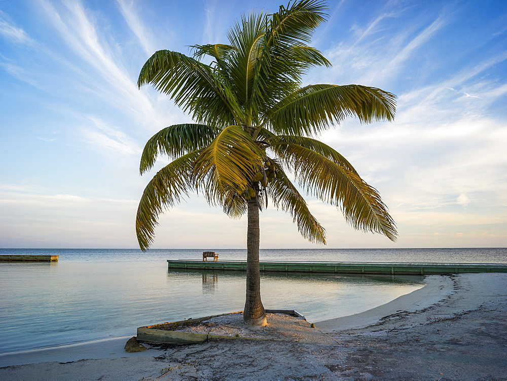 Palm tree on a white sand beach at sunrise, Belize