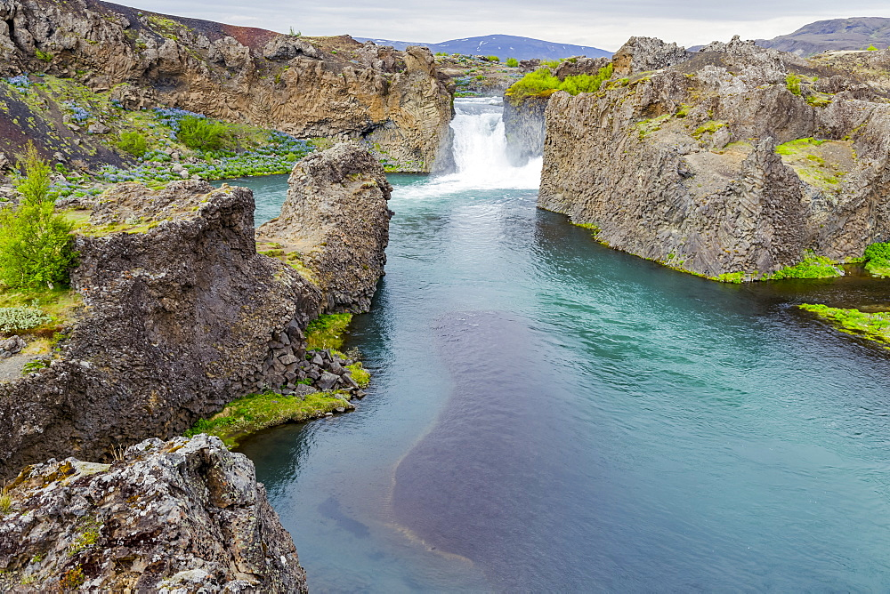 A wide angle view of the beautiful tourist stop at Hjalparfoss, Iceland where a pair of waterfalls and crystal blue water flow between fields of lupine flowers, Iceland
