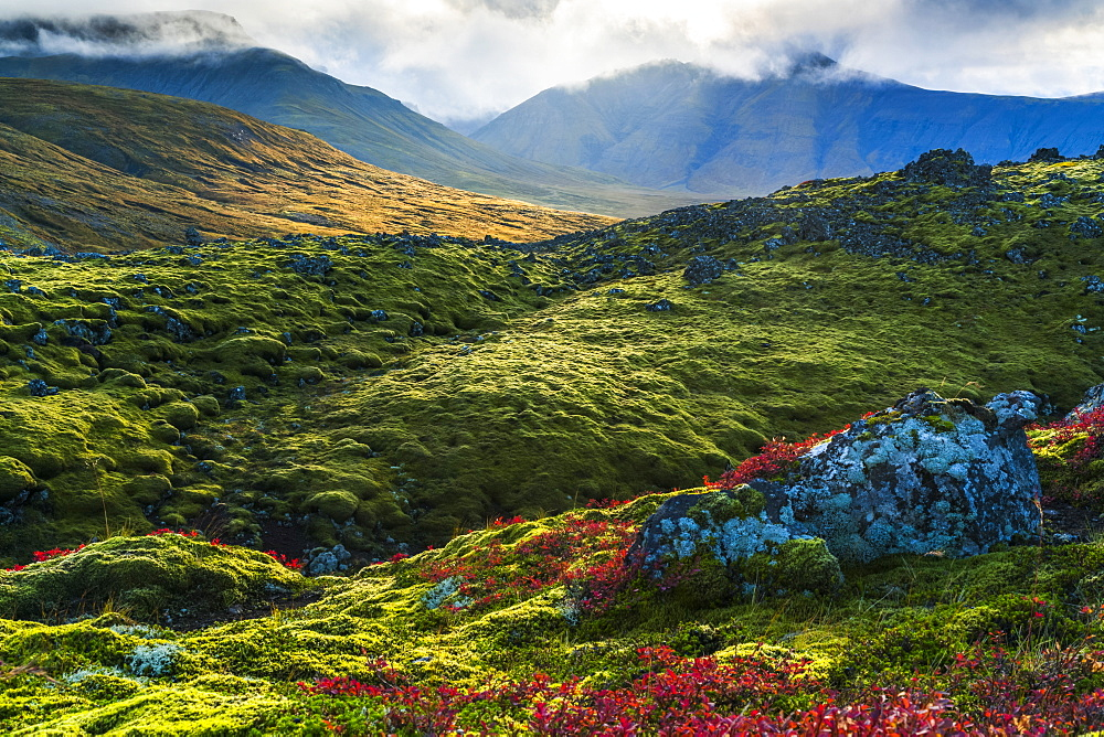 Beautiful colour on the mossy lava fields on the Snaefellsness Peninsula, Iceland