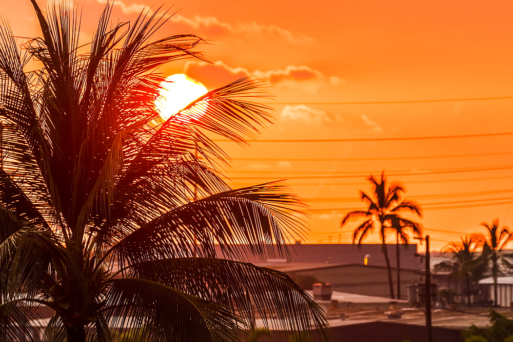 The setting sun viewed through a coconut palm tree from a hotel balcony, Kailua-Kona, Island of Hawaii, Hawaii, United States of America