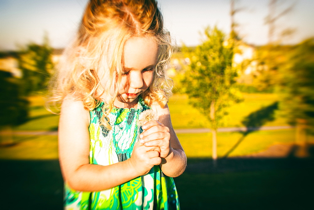 A cute little girl looking at a dandelion in a park late in the afternoon of a warm fall day, Spruce Grove, Alberta, Canada