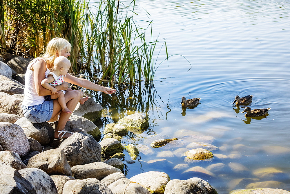 A young mother with enjoying quality time outdoors with her baby daughter watching and feeding some ducks together in a city park on a warm summer day, Edmonton, Alberta, Canada