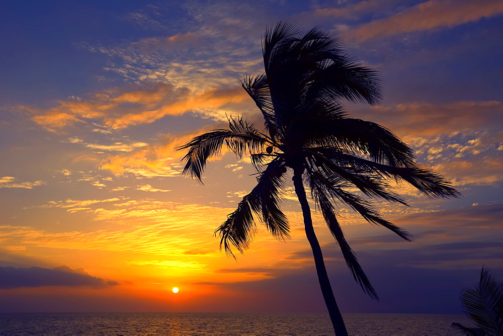 Palm tree at sunset, Wailea, Maui, Hawaii, United States of America