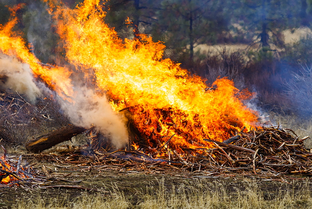 Forest fire prescribed burn, Dairy, Oregon, United States of America