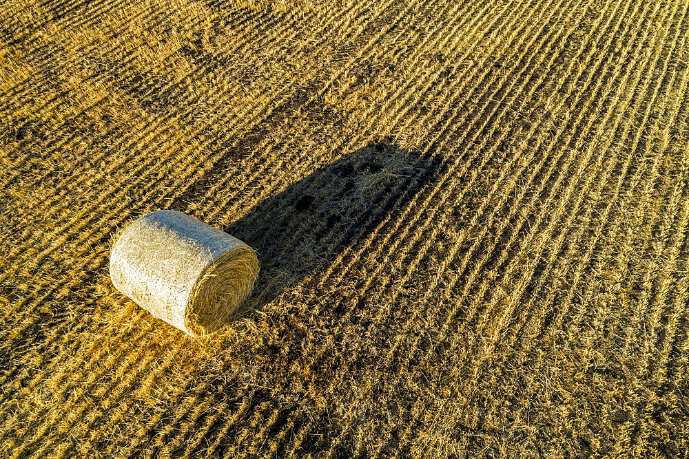 Hay bale in a cut field with long shadow at sunrise, Alberta, Canada