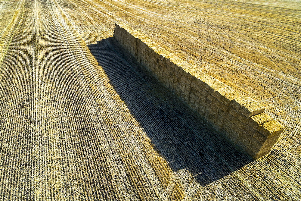 Aerial view of stacked square hay bales in a cut field with long shadows, Alberta, Canada