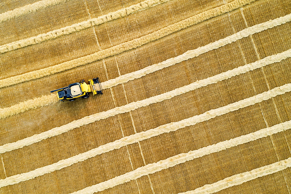 Aerial artistic view directly above a combine collecting lines of grain, Beiseker, Alberta, Canada