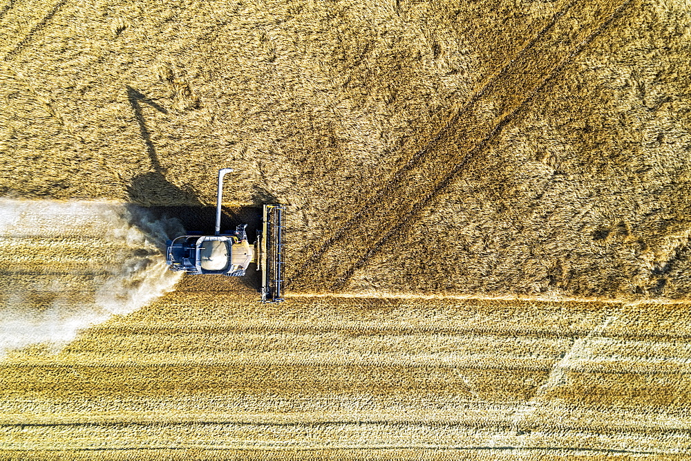 View from directly above of a combine cutting a barley field, Blackie, Alberta, Canada