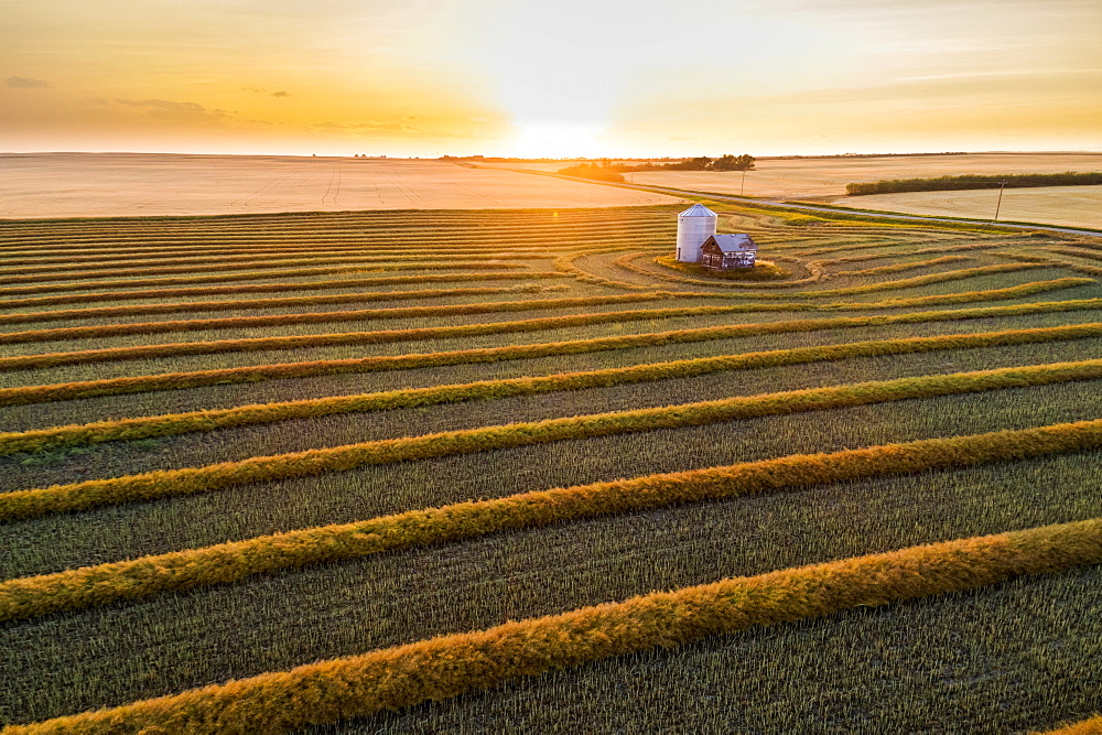 Aerial views of canola harvest lines glowing at sunset, Blackie, Alberta, Canada - 1116-48698