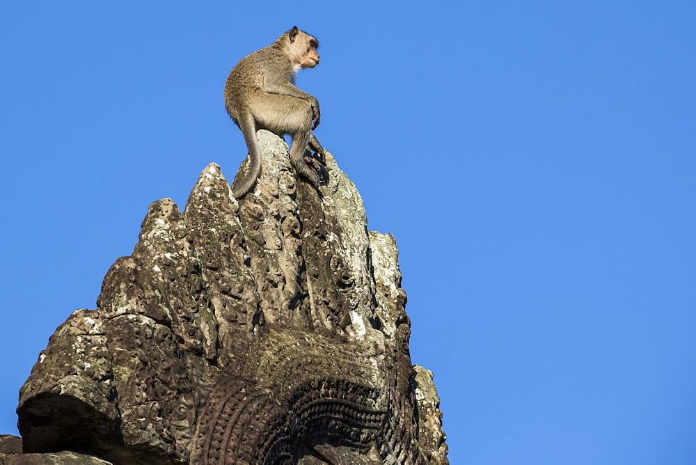 Monkey atop the ruins, Angkor Wat, Siem Reap, Cambodia