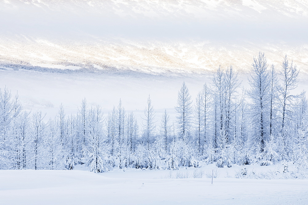 Warm afternoon sunlight bathes the distant mountains in-between low clouds obscuring the hillside, hoar frost covered birch trees lining the shaded foreground, Turnagain Pass, Kenai Peninsula, South-central Alaska, Alaska, United States of America