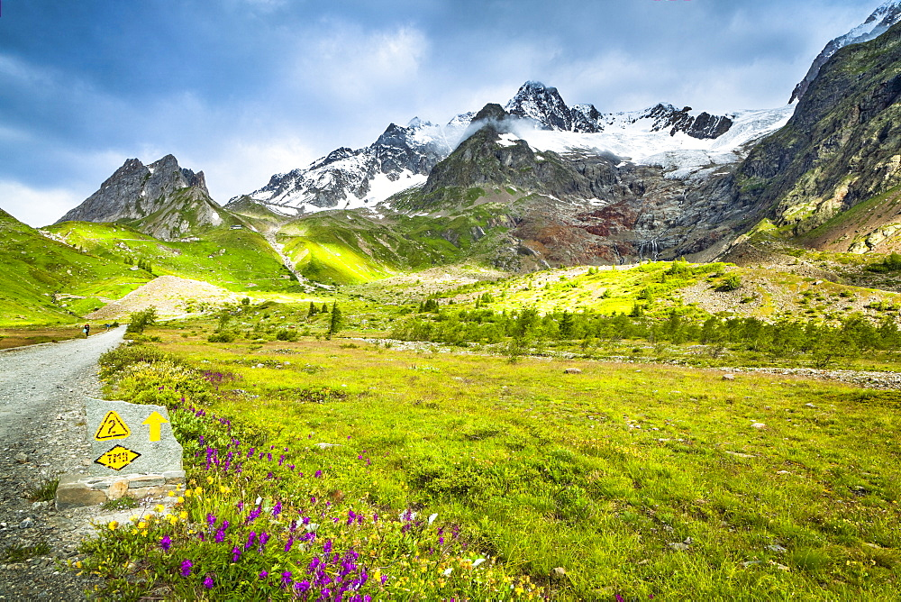 Wildflowers blooming along Tour du Mont Blanc trail, with mountain range and glaciers in the background, Val Veni, Aosta Valley, Italy