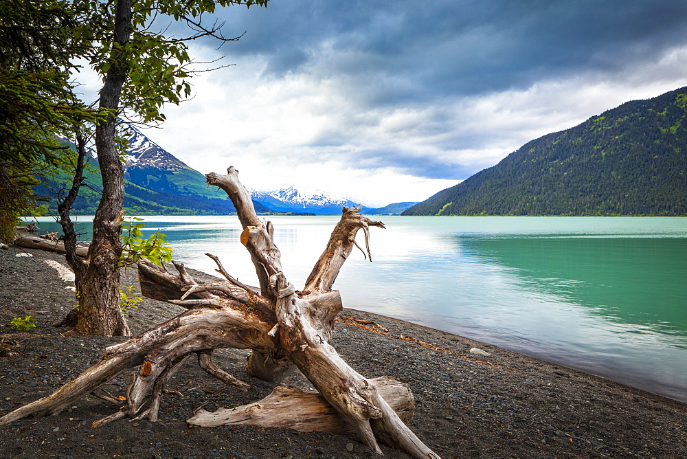 Kenai Lake beach, Chugach National Forest, South-central Alaska in summertime, Alaska, United States of America