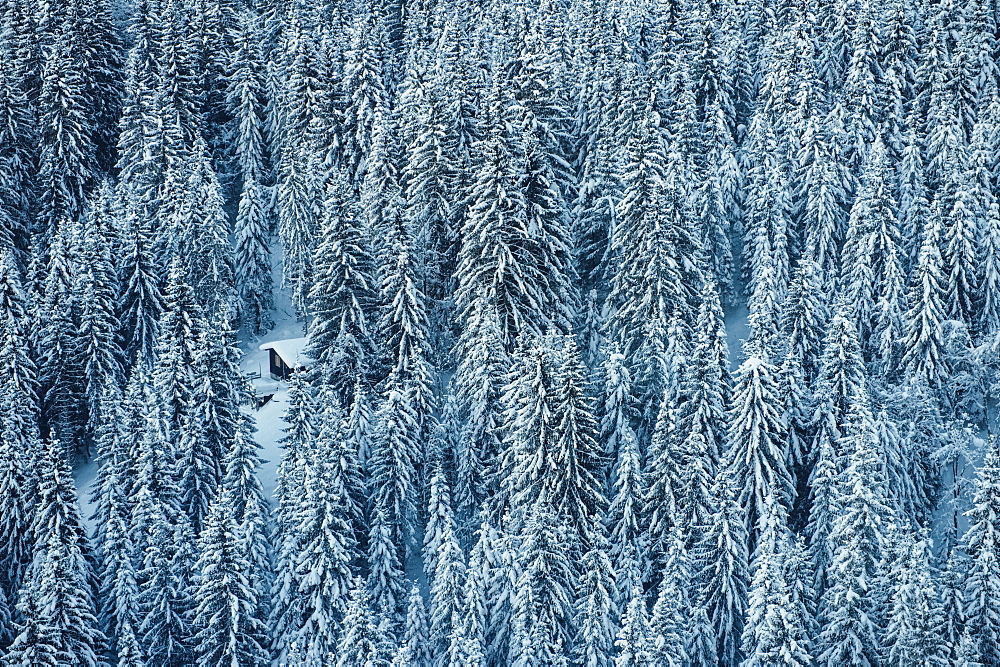 A dense coniferous forest covered in snow with a snowmobile parked in a small clearing, Laax, Switzerland