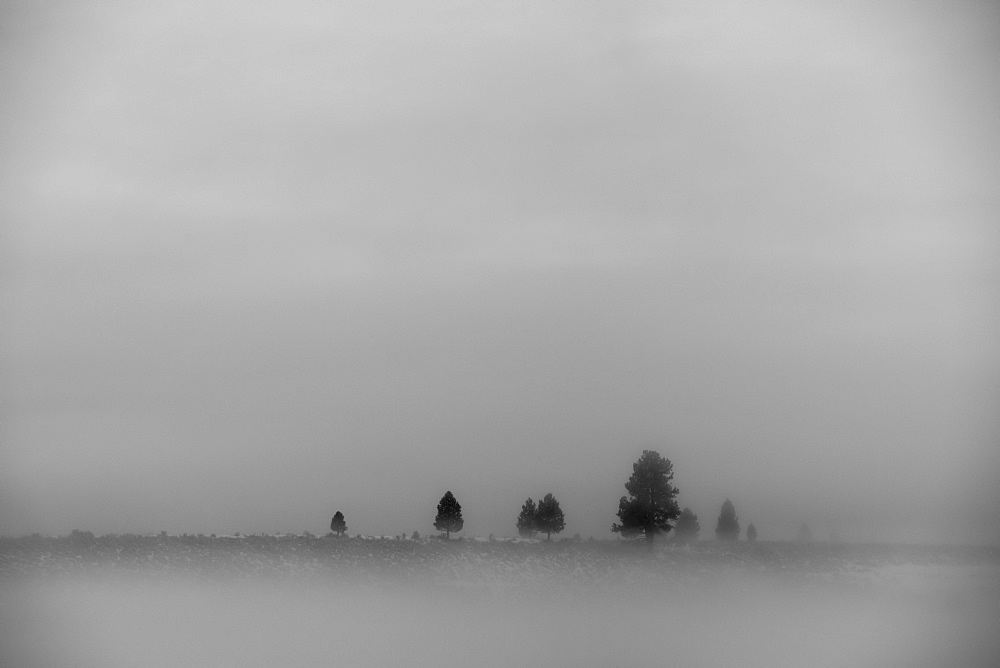 A landscape in fog scattered with a few trees and dense cloud in the sky, California, United States of America