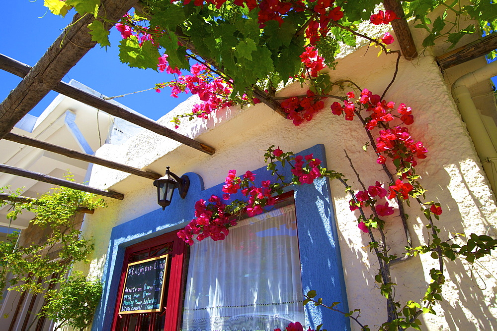 Restaurant exterior with bougainvillea, Kritsa, Crete, Greek Islands, Greece, Europe - 1126-1575