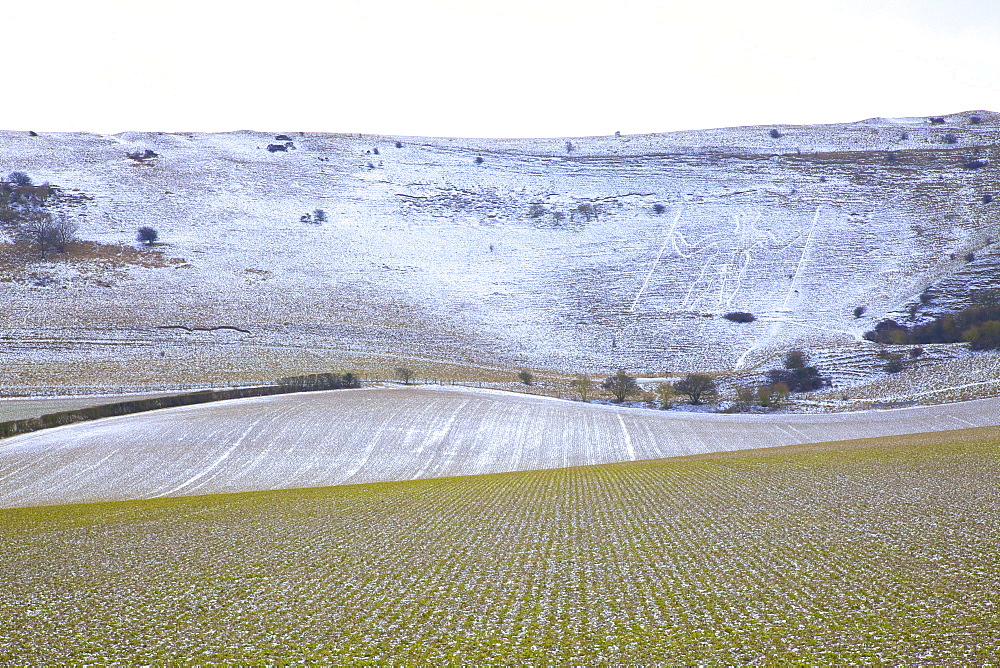 Snow covered Long Man of Wilmington, Wilmington, South Downs, East Sussex, England, United Kingdom, Europe - 1126-1622