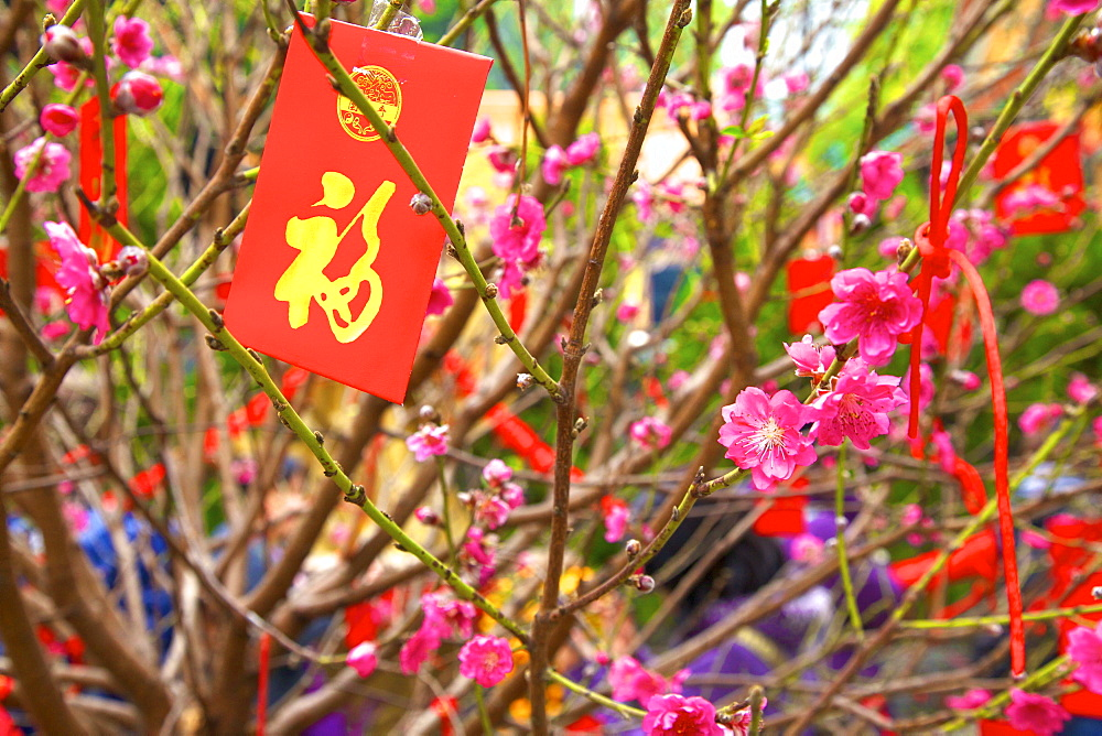 Cherry Blossom Trees With Lai See Red Envelopes For Chinese New Year, Hong Kong, China, South East Asia - 1126-1662