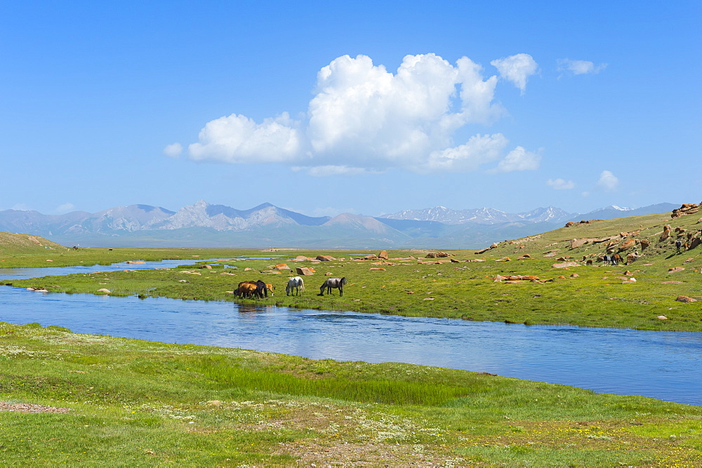 Grazing horses, Road to Song Kol Lake, Naryn province, Kyrgyzstan, Central Asia, Asia - 1131-1067