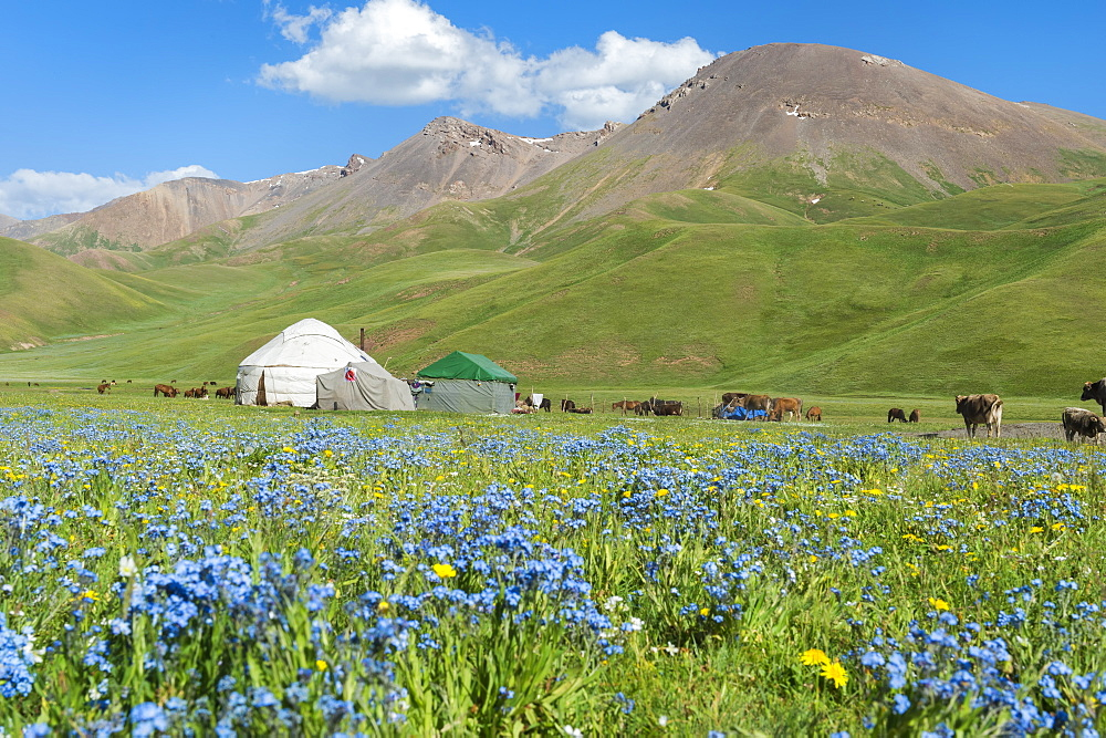Nomad yurt camp, Song Kol Lake, Naryn province, Kyrgyzstan, Central Asia, Asia - 1131-1069