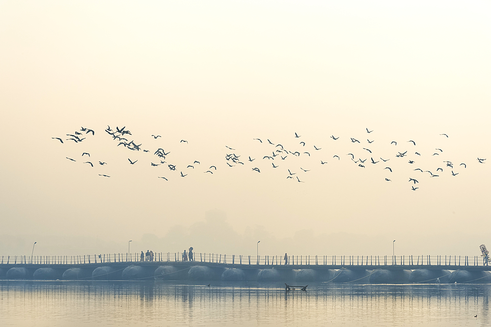 Flock of Cormorants over the Ganges river at sunrise, Allahabad Kumbh Mela, Uttar Pradesh, India