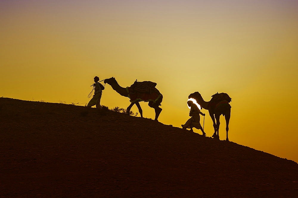Two Rabari men climbing a dune with their dromedaries at sunset, Great Rann of Kutch Desert, Gujarat, India, Asia