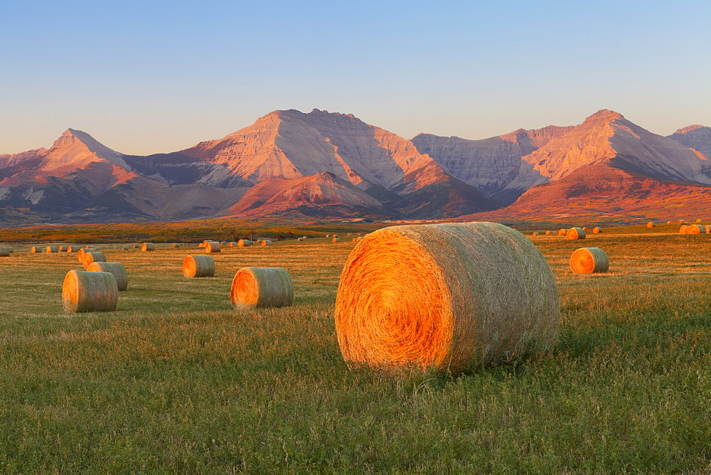 Hay bales in a field with the Rocky Mountains in the background, near Twin Butte, Alberta, Canada, North America