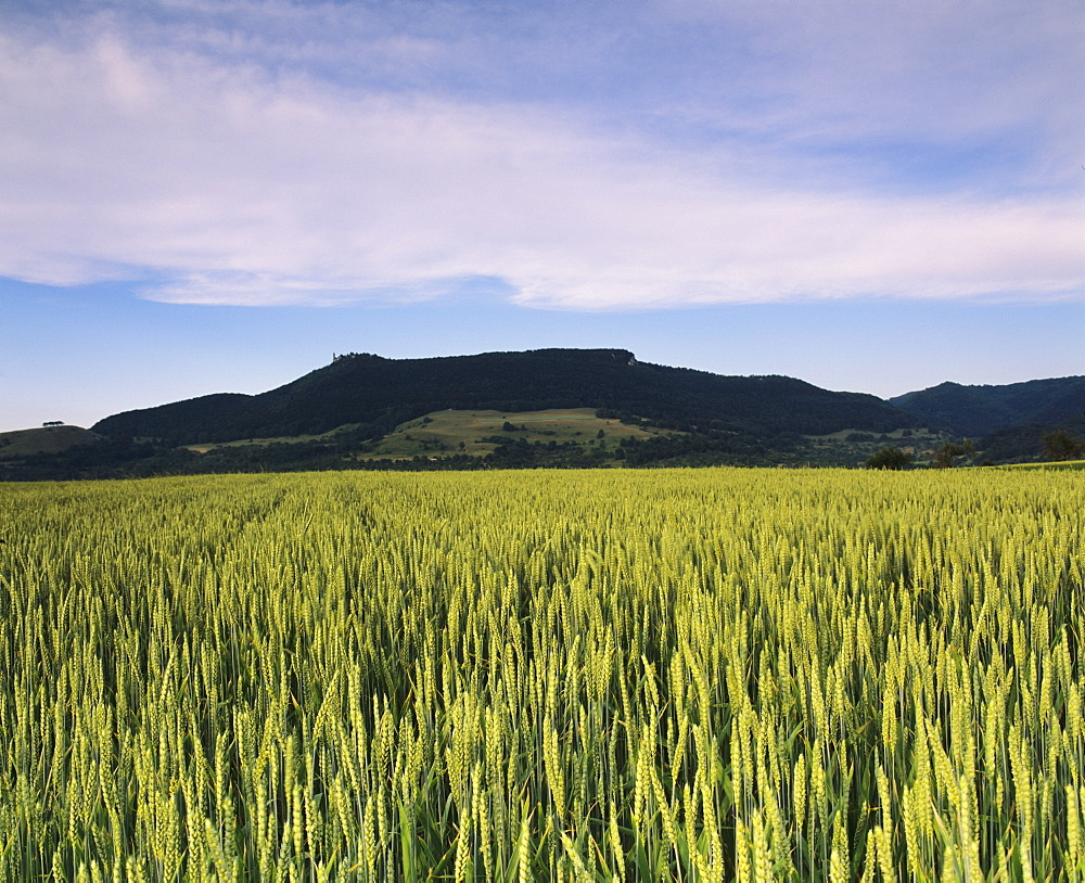 Corn field, Teckberg Mountain, Teck Castle, Kirchheim, Swabian Alb, Baden Wurttemberg, Germany, Europe