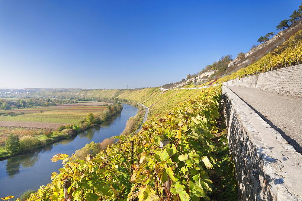 Vineyards in autumn, Mundelsheim, Neckartal Valley, Neckar River, Baden Wurttemberg, Germany, Europe