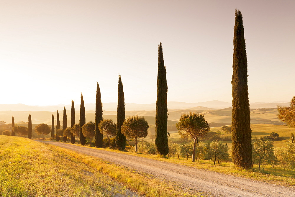 Alley of cypress trees at sunrise, near San Quirico, Val d'Orcia (Orcia Valley), UNESCO World Heritage Site, Siena Province, Tuscany, Italy, Europe