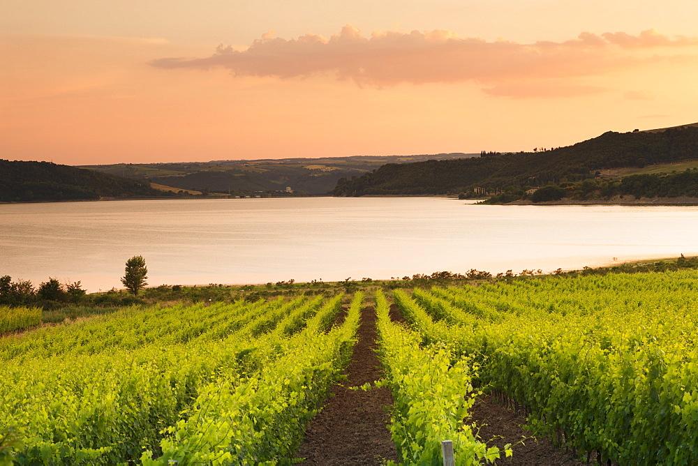 Vineyards at Lago di Corbara Lake at sunset, Perugia District, Umbria, Italy, Europe