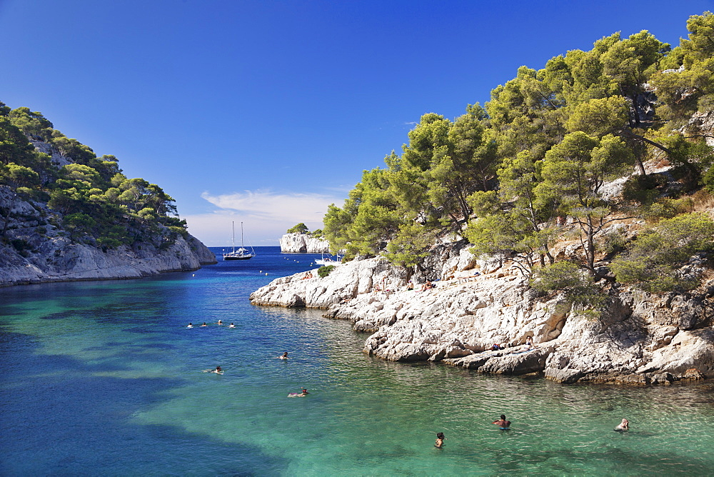 Les Calanques Port Pin, National Park, Cassis, Provence, Provence-Alpes-Cote d'Azur, Southern France, France, Europe