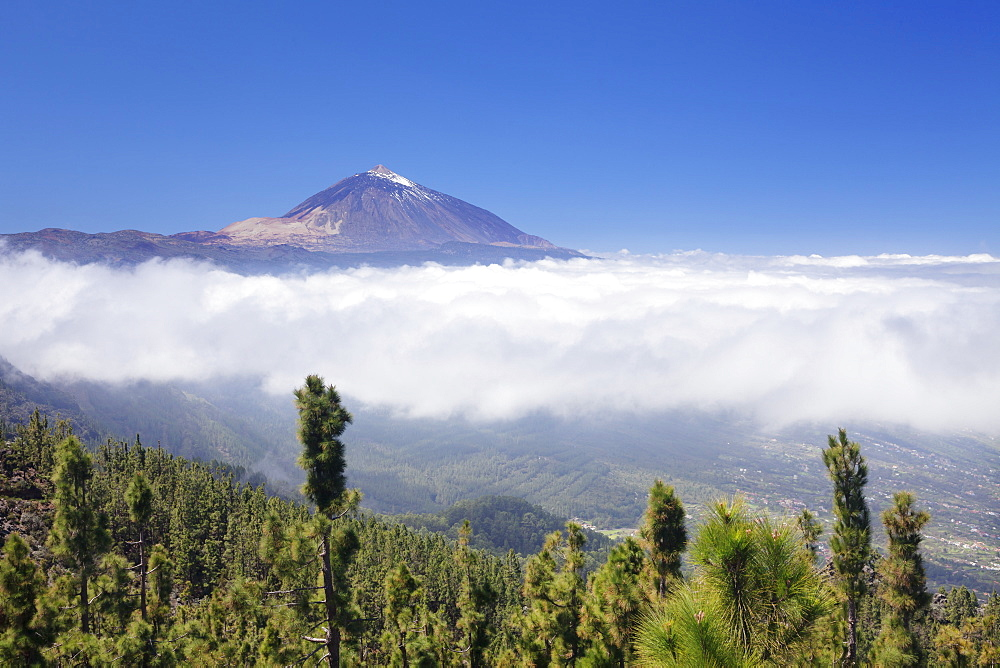 View over Orotava Valley to Pico del Teide, National Park Teide, UNESCO World Heritage Site, Tenerife, Canary Islands, Spain, Europe