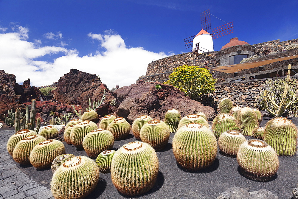 Cactus garden Jardin de Cactus by Cesar Manrique, wind mill, UNESCO Biosphere Reserve, Guatiza, Lanzarote, Canary Islands, Spain, Atlantic, Europe