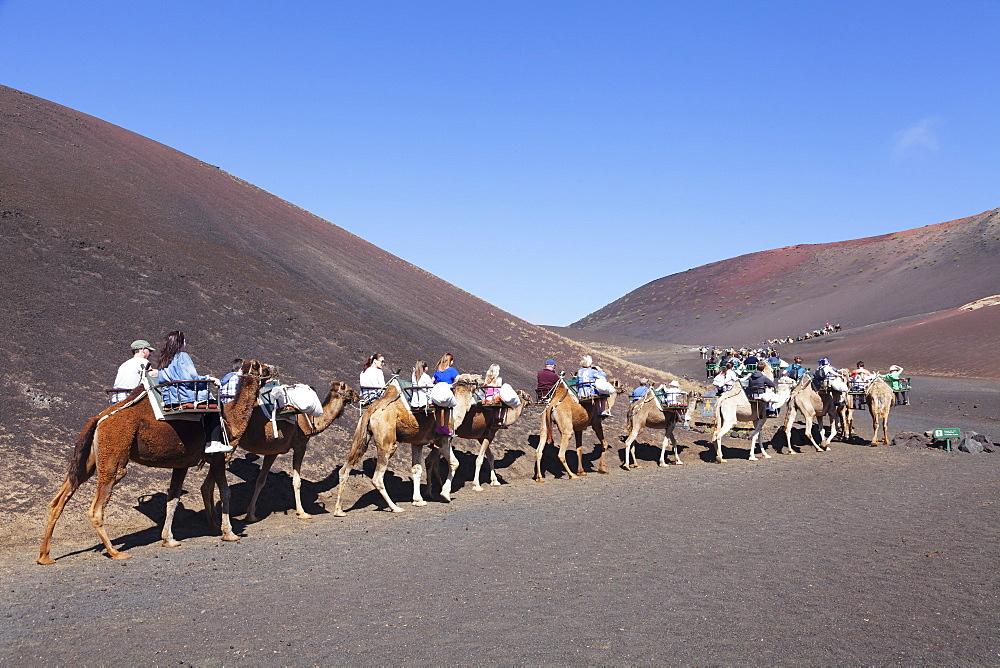 Tourists on camel tour, dromedaries, Parque National de Timanfaya, Lanzarote, Canary Islands, Spain, Atlantic, Europe