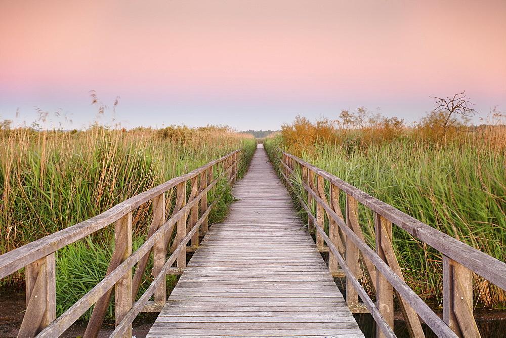 Boardwalk at sunrise, Federsee Lake, Nature reserve, Bad Buchau, Upper Swabia, Baden-Wurttemberg, Germany, Europe