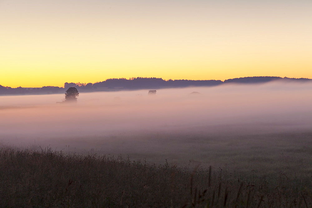 Early morning fog, landscape near Bad Buchau, Upper Swabia, Baden-Wurttemberg, Germany, Europe