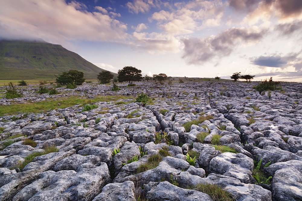 Limestone pavement and Ingleborough mountain, Ingleborough National Nature Reserve, Yorkshire Dales, North Yorkshire, England, United Kingdom, Europe