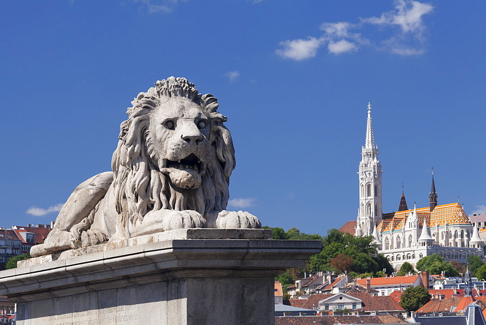 Lion statue on Chain Bridge, Matthias Church on Castle Hill, UNESCO World Heritage Site, Budapest, Hungary, Europe