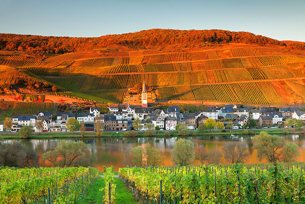 View of Merl district, Moselle Valley, Zell an der Mosel, Rhineland-Palatinate, Germany, Europe - 1160-3776
