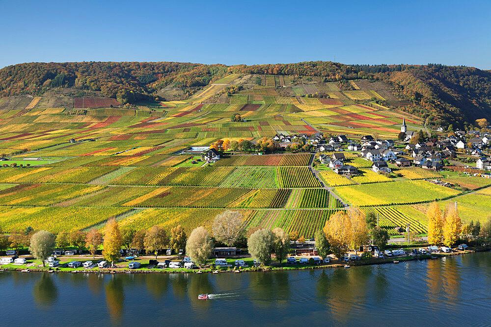 Vineyards in autumn, near Beilstein, Rhineland-Palatinate, Germany, Europe