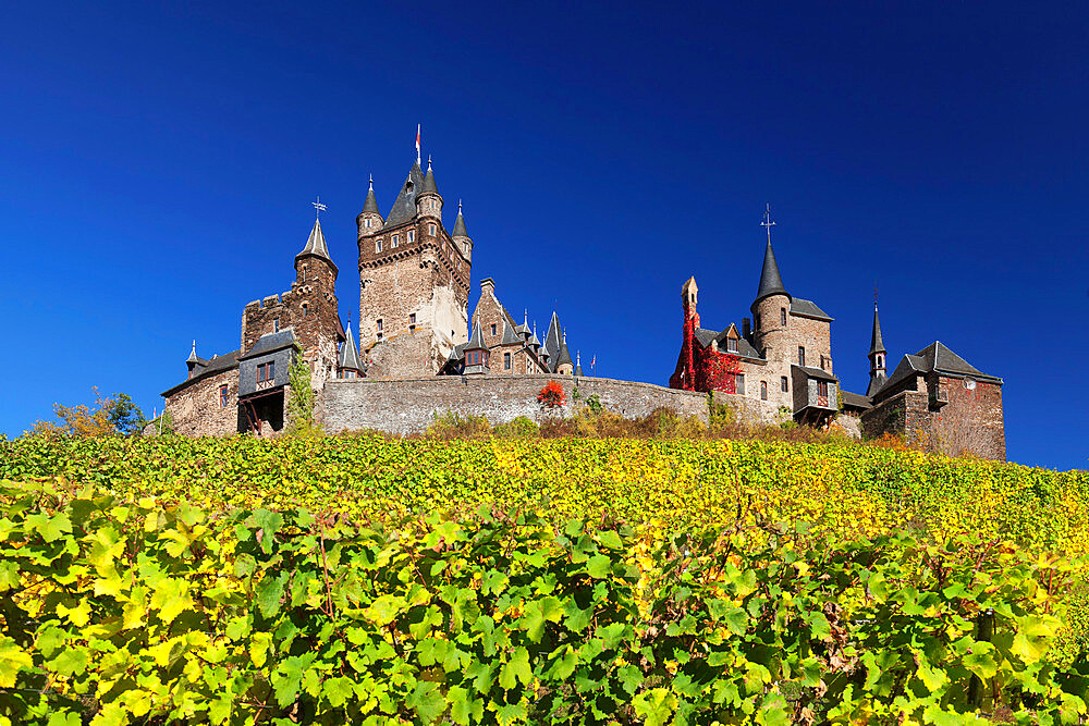Reichsburg Castle and vineyards in autumn, Cochem, Moselle Valley, Rhineland-Palatinate, Germany, Europe - 1160-3820