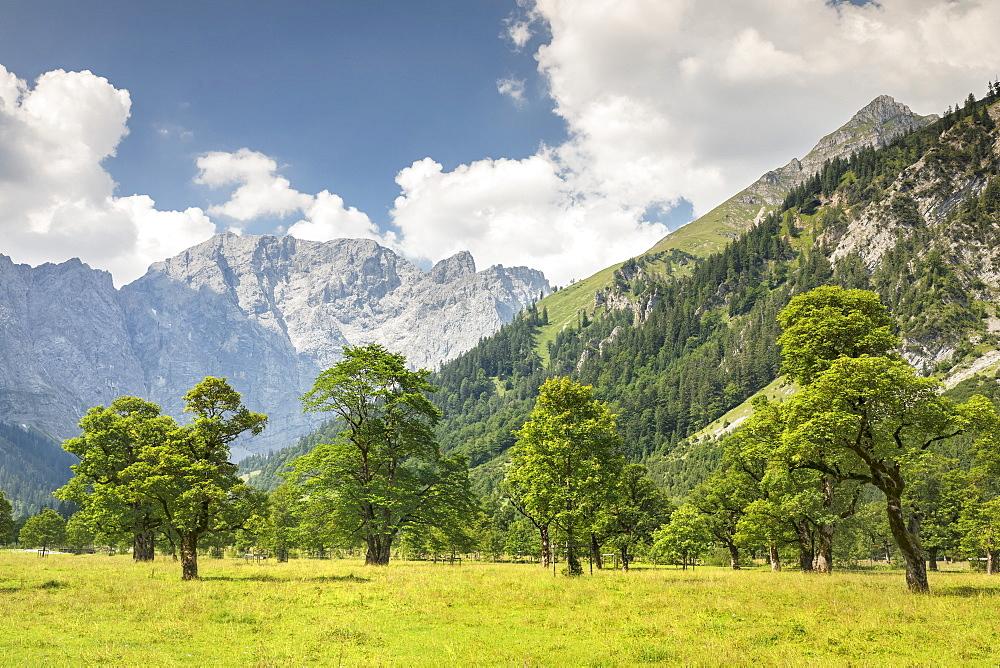 Grosser Ahornboden, maple trees, Karwendel mountains, nature reserve, Eng, Hinterriss, Tyrol, Austria, - 1160-3922