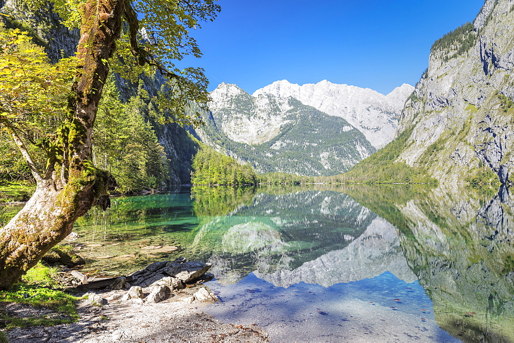 Watzmann Mountain reflecting in Lake Obersee, near lake Koenigssee, Berchtesgadener Land, Berchtesgaden National Park, Upper Bavaria, Bavaria, Germany - 1160-3955