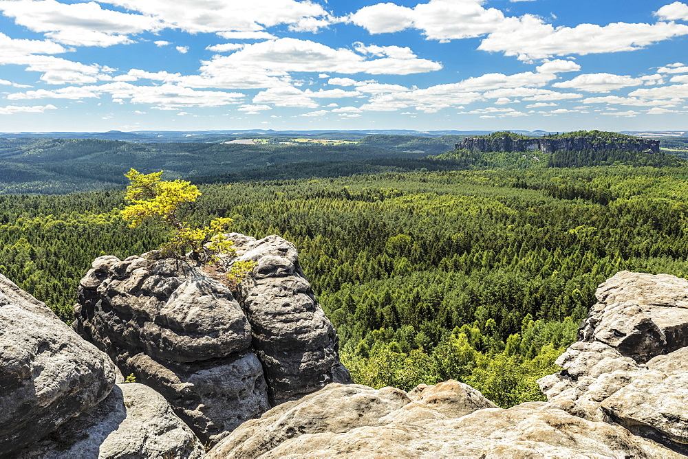 Blick vom Gohrisch (440m) to Koenigstein Fortress, Elbsandstein Mountains, Saxony Switzerland National Park, Saxony, Germany